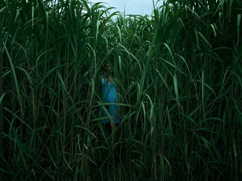 In-the-tall-grass-Netflix-stephen-king