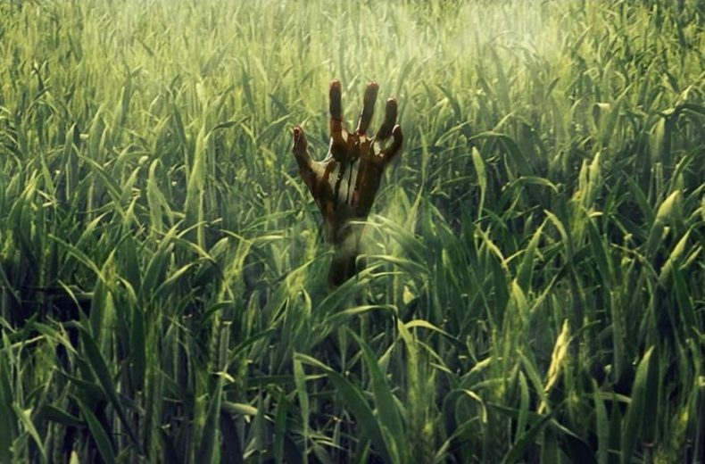 In the Tall Grass ~ Review